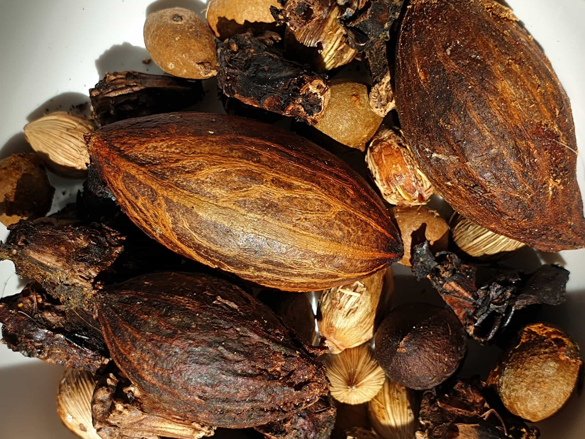 Kereru Poo Seeds